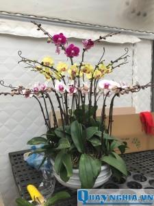 Tết đến nên tặng chậu hoa để trang trí cửa nhà