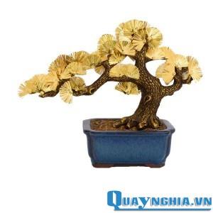 cây-tùng-dát-vàng-600x600